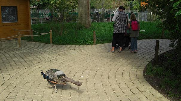 Heidelberger-Zoo_Wegbegleiter