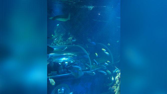 Sea-Life-Konstanz_Gläserner-Tunnel_aussen