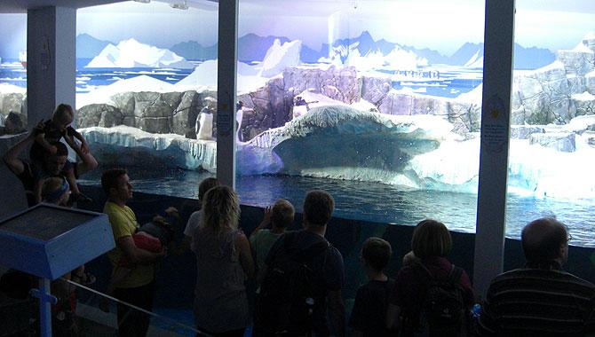 Sea-Life-Konstanz_Pinguine