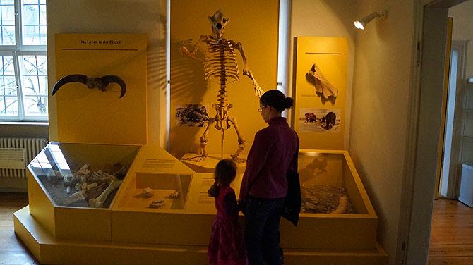 Bamberger-Naturkundemuseum_Ausstellung