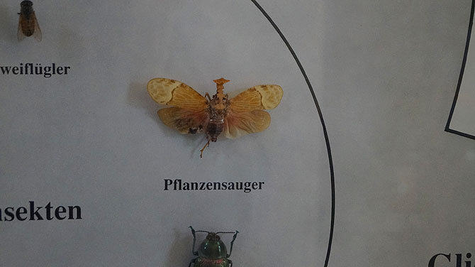 Bamberger-Naturkundemuseum_Pflanzensauger