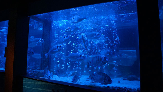 Sea-Life-Berlin_Aquarium