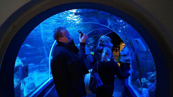 Sea-Life-Berlin_Gläserner-Tunnel