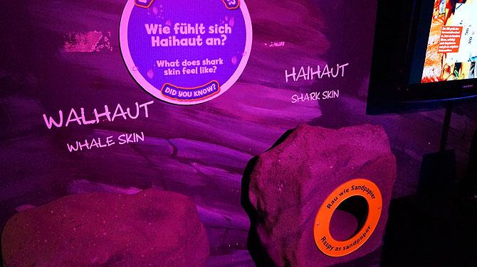 Sea-Life-Berlin_Haihaut