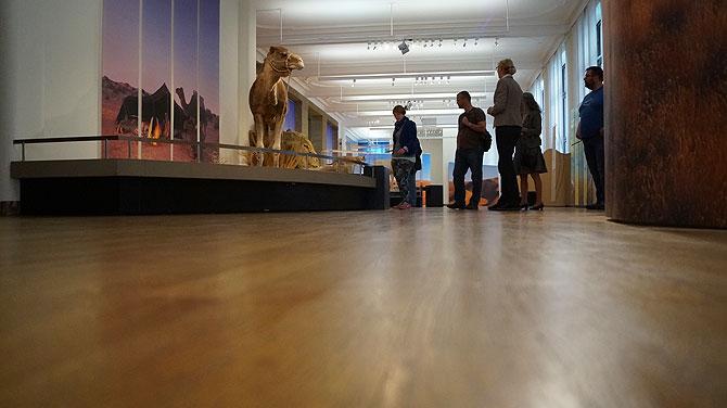 Museum-Koenig_Ausstellung