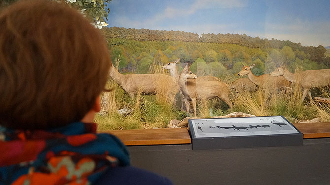 Museum-Koenig_Diorama