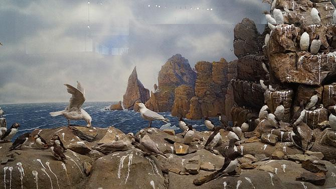 Museum-Koenig_Pinguine