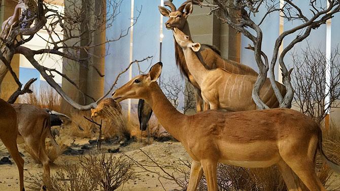 Museum-Koenig_Wüste
