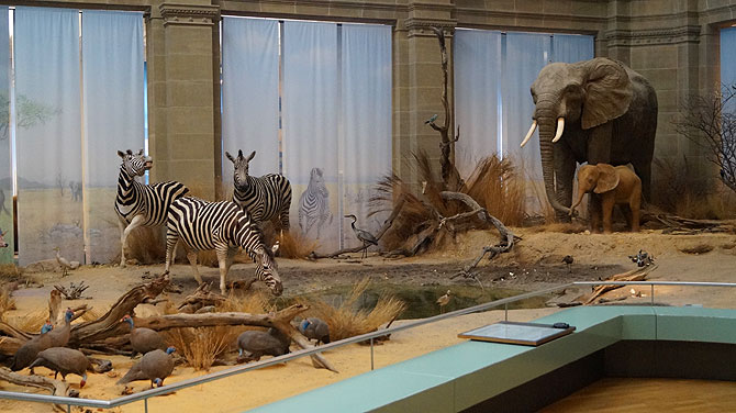 Museum-Koenig_Zebras