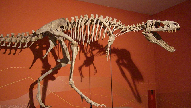 Gondwana-Dinoskelett