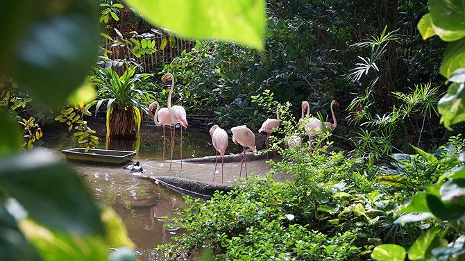 Tropical-Islands-Flamingos