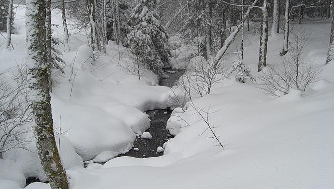Schneeschuhwandern-im-Schwarzwald-Eisbach