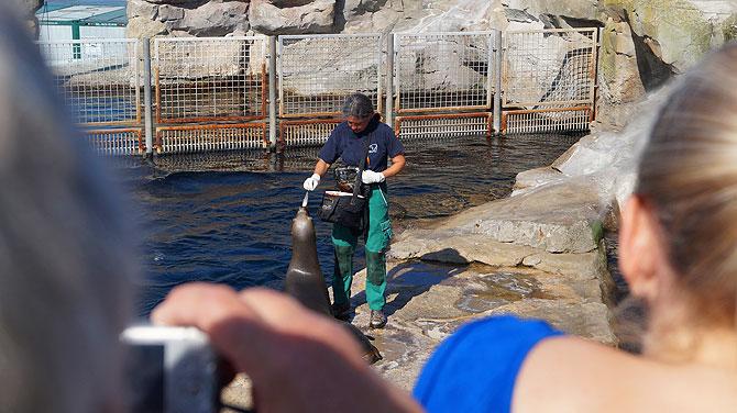 Fütterung im Zoo am Meer