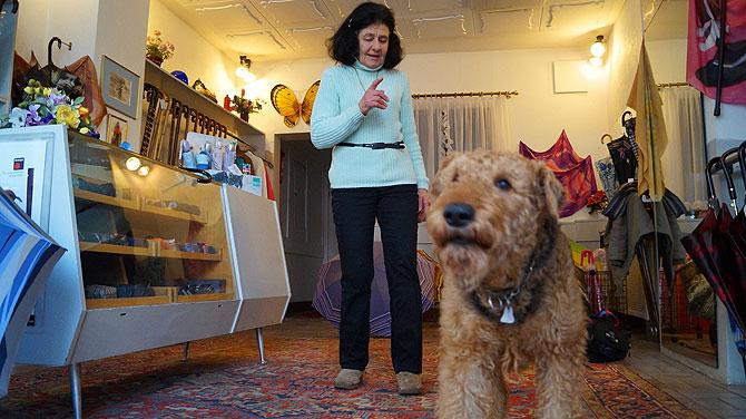 Der nicht ganz so kleine Lord, Gisas Hund, wacht über den Laden.