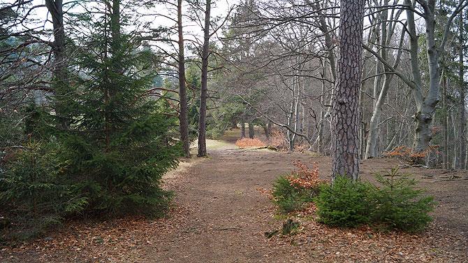 Waldweg auf dem Traufgang Zollernburg Panoramaweg