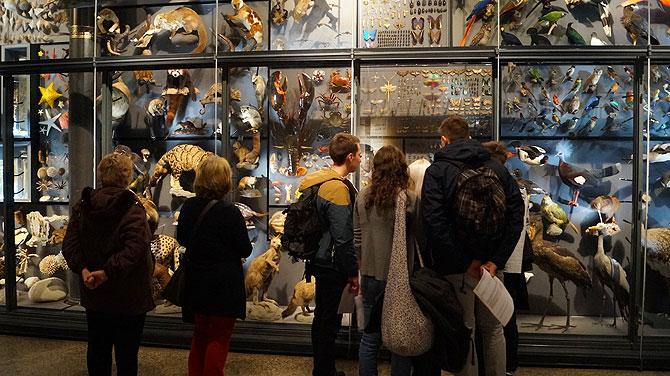 Die Ausstellung im Museum für Naturkunde in Berlin hat einiges zu bieten.