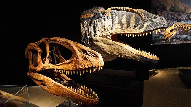 Beeindruckende Dinoköpfe