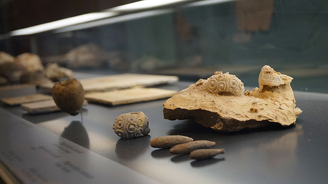 Fossilien gibt es auch einige im Museum zu bestaunen.