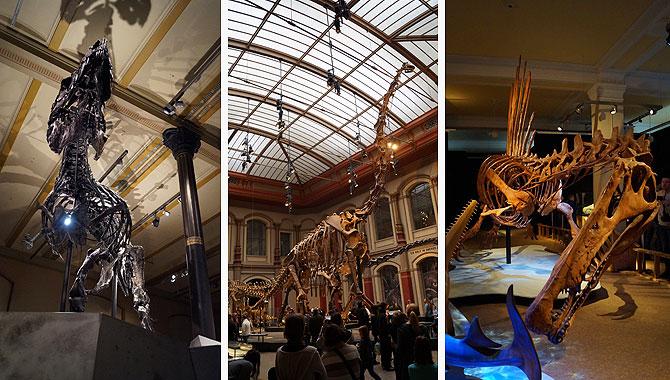 Highlights im Museum für Naturkunde: Tristan, Brachiosaurus, Spinosaurus