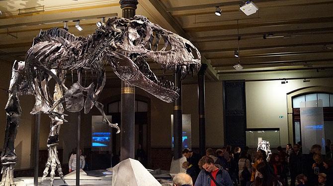 T-Rex Tristan Otto, der Superstar des Museums