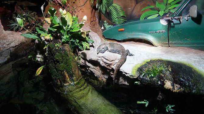 Im Regenwald gibt es sogar echte Tiere.