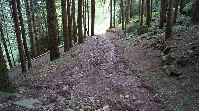 Der weniger schöne Weg durch den Schwarzwald