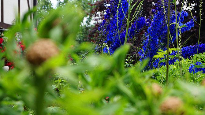 Unkraut hat die Kräuterhexe von Probstzella nicht im Garten.
