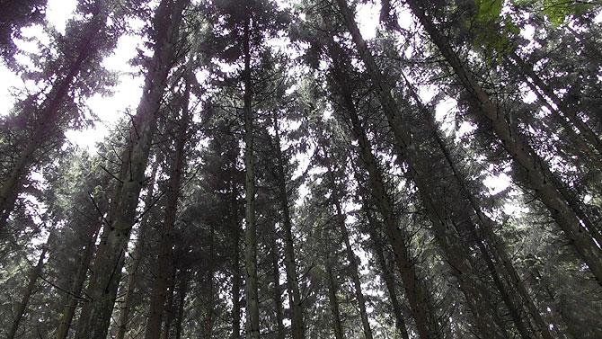 Baumkronen haben was Besonderes an sich.