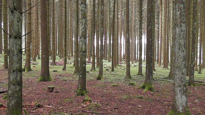 Auf dem Wandermarathon gibt es viel Wald zu sehen.