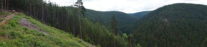 Waldiges Panorama