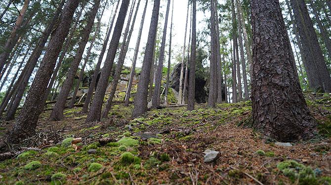 Der Thüringer Wald ist ein schönes Wanderziel.