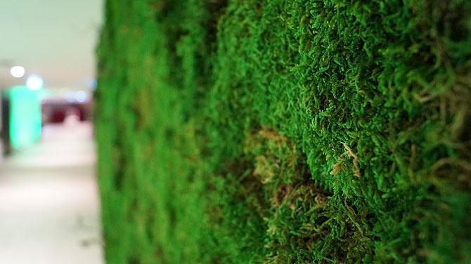 Die Grasdekotapete bitte nicht berühren