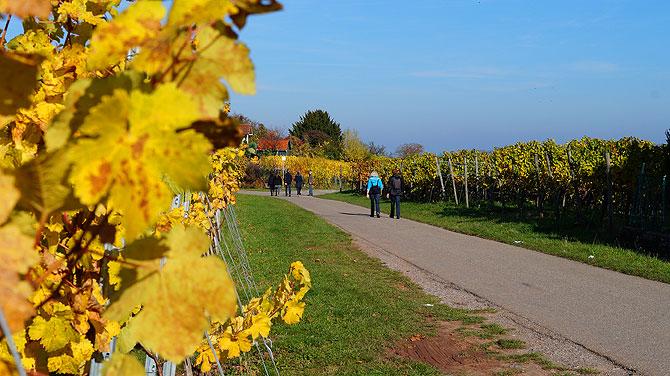 Wanderung von Winnenden nach Grunbach