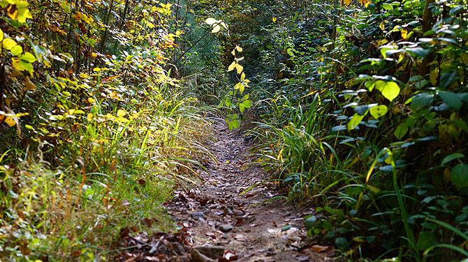 (Ur-)Wald bei Buoch