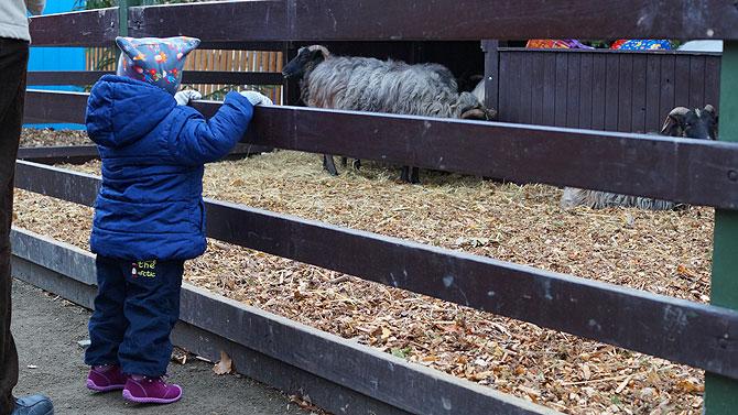 Schafe und Ziegen im Märchenwald