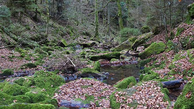 Wildromantisch, der Schwäbische Urwald
