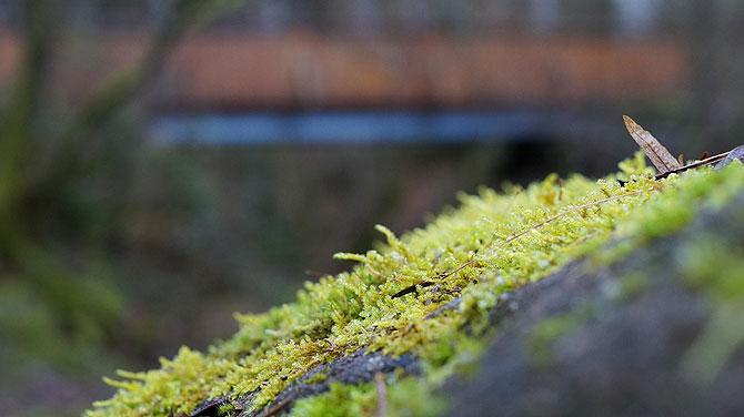 Vorne Moos, hinten Brücke