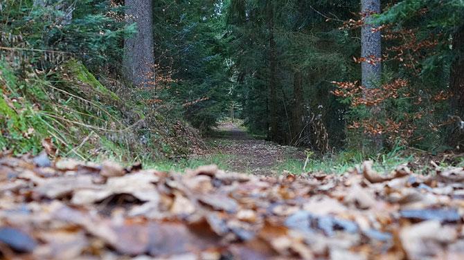 Eingang in den Zauberwald