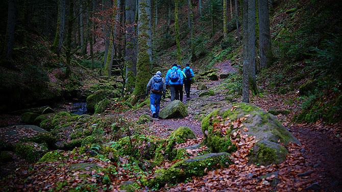 Eine Winterwanderung durchs Monbachtal ist für Jedermann geeignet