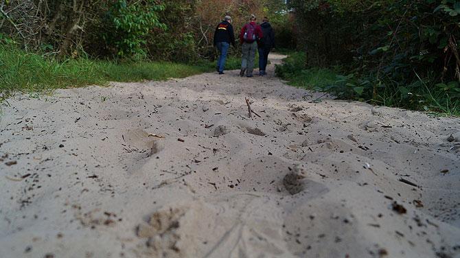 Ein Sandweg führt zur Aussicht auf den Hammersee