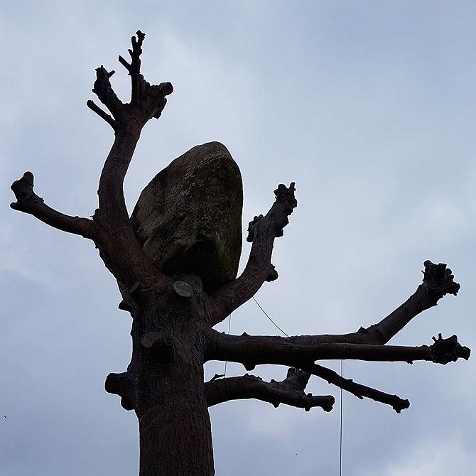 Penone Baum der documenta 13