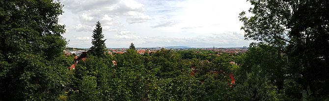 Buchenwaldblick-Panorama