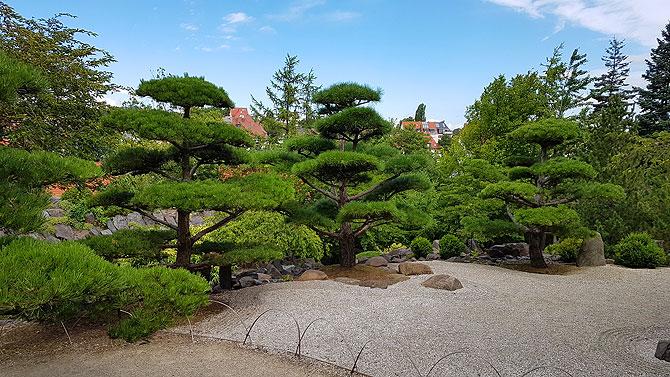 Japanische Pflanzen im idyllischen Garten.