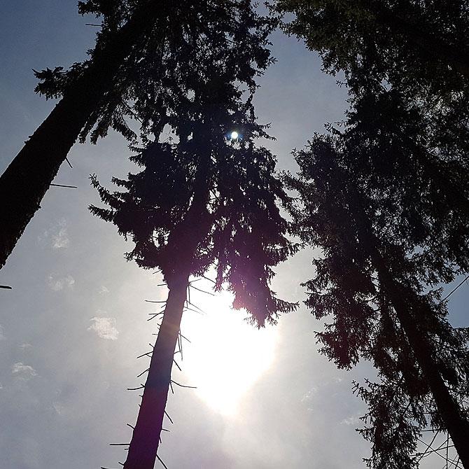 Blick in den Himmel von den Hängematten aus
