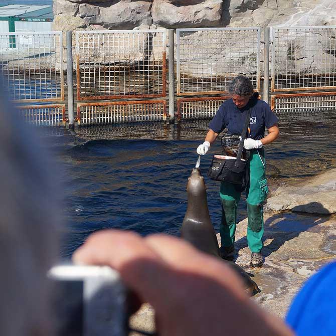 Fütterung der Robben im Zoo am Meer