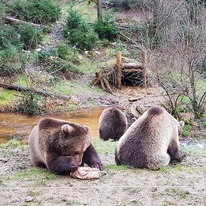Früher unglücklich, heute glückliche Bären