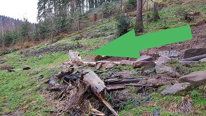 Im Bärenpark Schwarzwald gibt es auch Luchse
