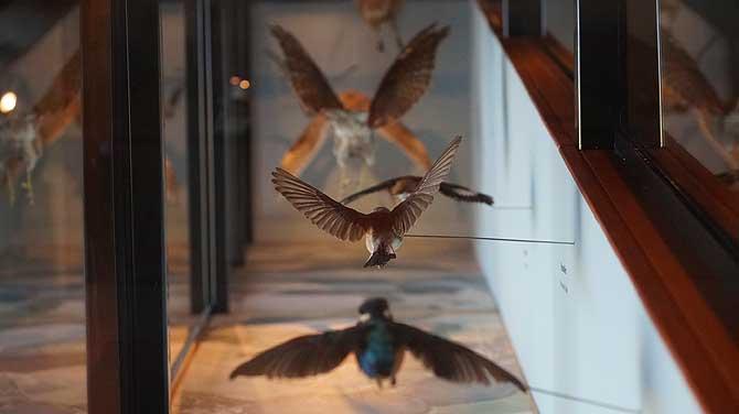 Kraniche und andere Zugvögel