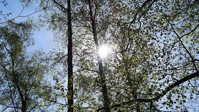 Sonne scheint durch die Baumkronen