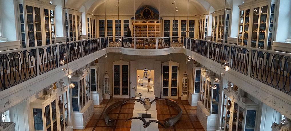 Bamberger Naturkundemuseum